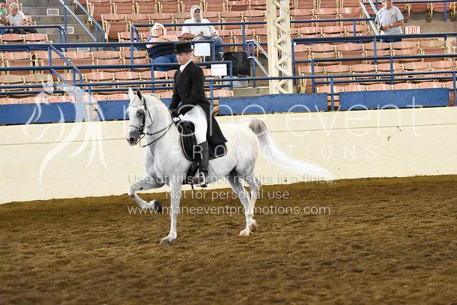 ABU Arabian Horse Show by Hannah Draughan Photography