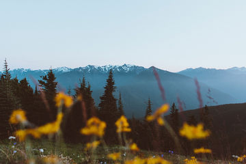 Hurricane-Ridge-Washington-TheMandagies.jpg