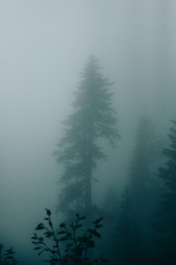 Tree-Mt-Rainier-Washington-TheMandagies.jpg