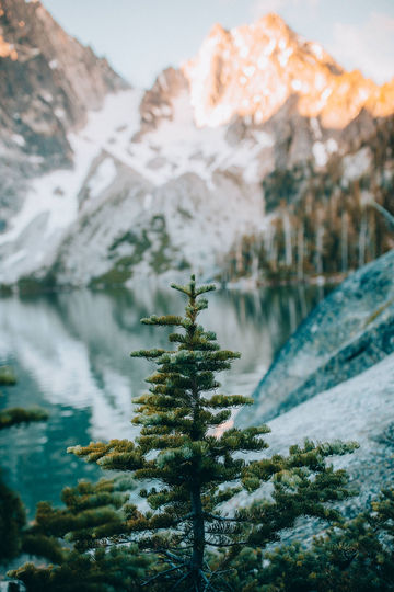 Pine-Tree-Colchuck-Lake-Washington-TheMandagies.jpg