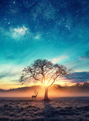 Deer-under-tree-sunset.jpg