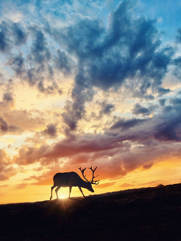 Deer-in-front-of-sunset-walking-no-tag.jpg